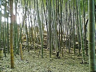 竹林の掃除