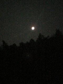 綺麗な月…